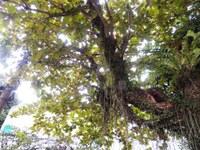 Secretário de Meio Ambiente recebe apoio da Câmara para projeto de arborização da cidade